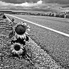 Sunflowers by nabokov