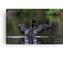 Shake it off - Common loon Canvas Print