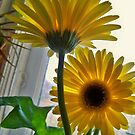 Oh SUNNY DAY! by Diane Trummer Sullivan