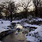 Bradgate Park Snow by Mike Topley