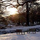 Bradgate Park Snow II by Mike Topley