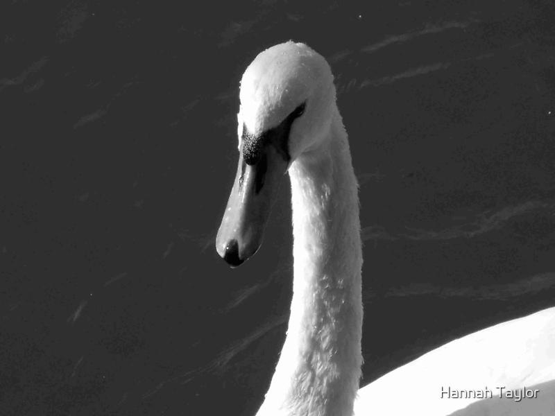 'Swan' by HannahT