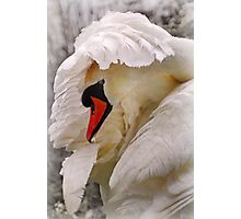 am i a swan yet? Photographic Print