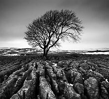Malham Tree by Jeanie