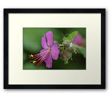 Curvy Stamen and Purple Flower Framed Print