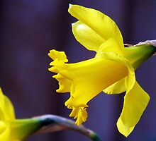 Golden Dawn of Spring! by artfulvistas