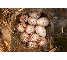 Chickadee Nest! Almost a Dozen Eggs! Photographic Print