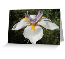 Reach for the Sky, Rain Lily, Tumut, Australia. Greeting Card