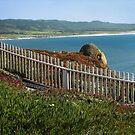 California Coast in Spring by Ellen Cotton
