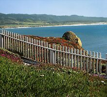 California Coast in Spring by Ellen Cotton