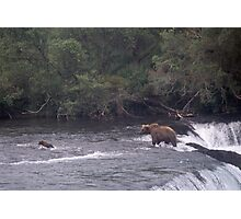 MOTHER BROWN BEAR AND CUB WADING IN BROOKS RIVER ALASKA Photographic Print