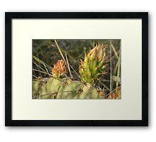 Flowering Cactus Framed Print