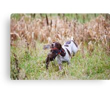GERMAN SHORT-HAIRED POINTER RETRIEVING PHEASANT  Canvas Print