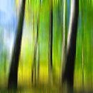 Forest lines by Caterpillar