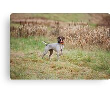 GERMAN SHORT-HAIRED POINTER ON POINT  Canvas Print