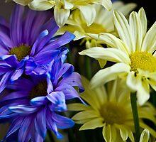 Gerber Bouquet by JHRphotoART