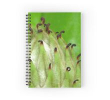 Melodic Spiral Notebook