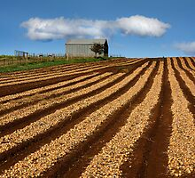 The Onion field - Sheffield Tasmania by Hans Kawitzki
