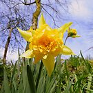 Cornwall: The Camel Trail - Spring Has Arrived by Rob Parsons