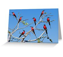 CARMINE BEE EATERS - ZAMBIA Greeting Card