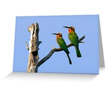WHITE FRONTED BEE EATERS - BOTSWANA Greeting Card