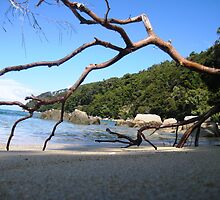 Bark Bay Beach, Abel Tasman National Park by Belle Morss