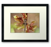 The Dragonfly Framed Print