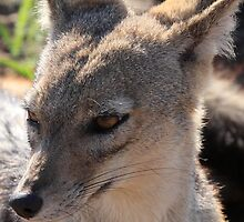 The Face of the Jackal by John Banks
