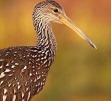 Limpkin at Sunset by Phillip  Simmons