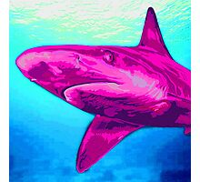 Pink Shark Photographic Print