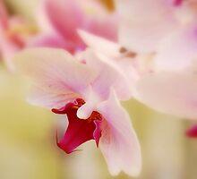 Happy Easter :-) by keleka656