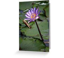 Purple water lillies IIV Greeting Card