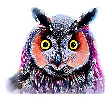 """Long eared owl"" Photographic Print"