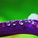 purple rain by ANNABEL   S. ALENTON