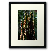 Euphorbea in partial sihouette Framed Print