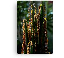 Euphorbea in partial sihouette Canvas Print