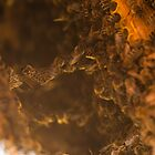 Deep down in the hive by Mark Bangert