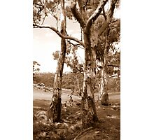 Magic Puddin' Country Photographic Print