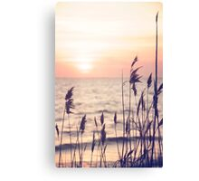 Dune grass in the sunset Canvas Print