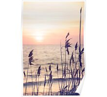 Dune grass in the sunset Poster