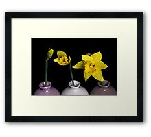 From Bud To Bloom Framed Print
