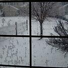 I Think I'll Stay Inside Today! by Pamela Hubbard