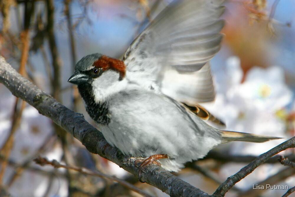Angel Wings by Lisa G. Putman