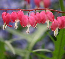Pink Flowers in Spring by Melanie Surplice