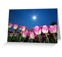 Field of Pink Tulips Greeting Card