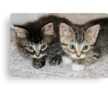 Two Orphan Kittens Canvas Print