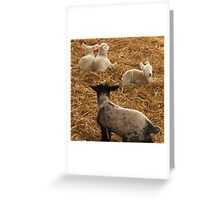 Oi!! Wake Up you 3 & Play with me !! Greeting Card