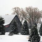 shades of winter by Lynne Prestebak