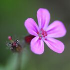 Geranium by jimmylu