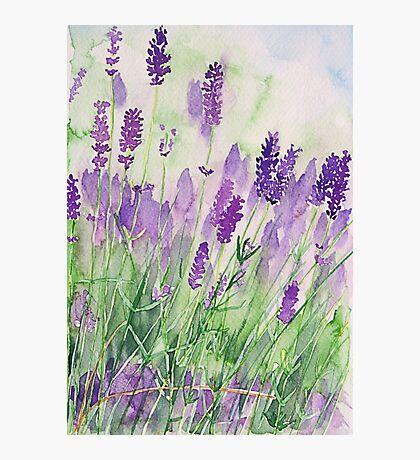 Parfum de la Provence Photographic Print